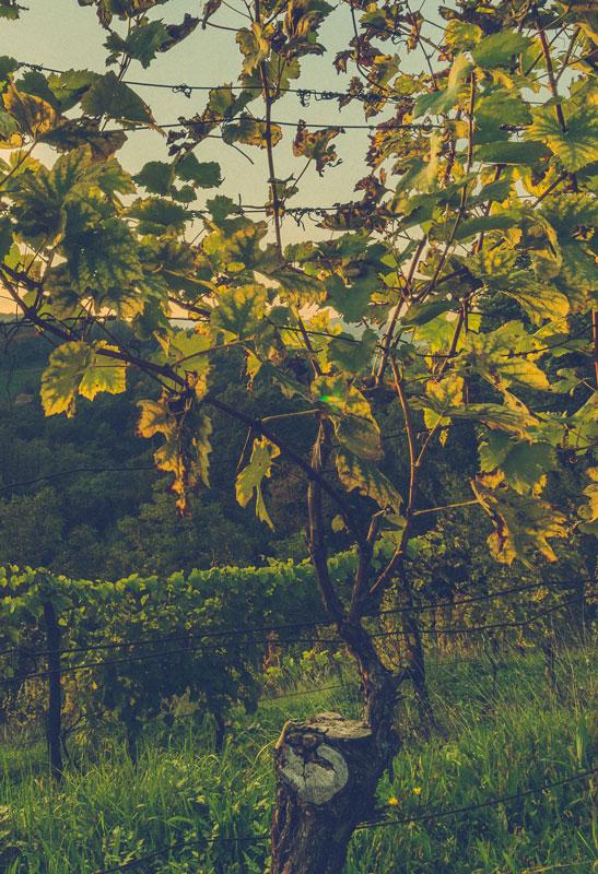 Fresh, aromatic wines